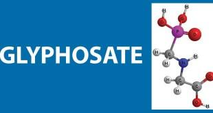 La Commission européenne renouvelle l'autorisation du glyphosate !