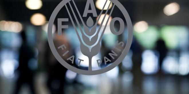 FAO: Réunion de Haut Niveau en faveur du climat lors de la COP22