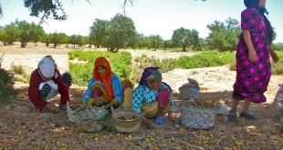 ONDH et FAO: Atelier de soutien de la petite agriculture