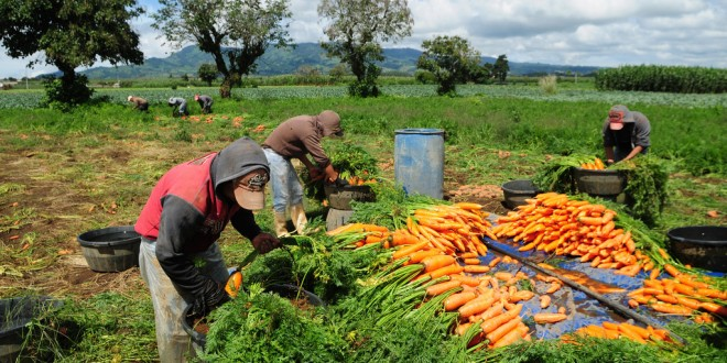 FAO: Légère baisse des prix des produits alimentaires