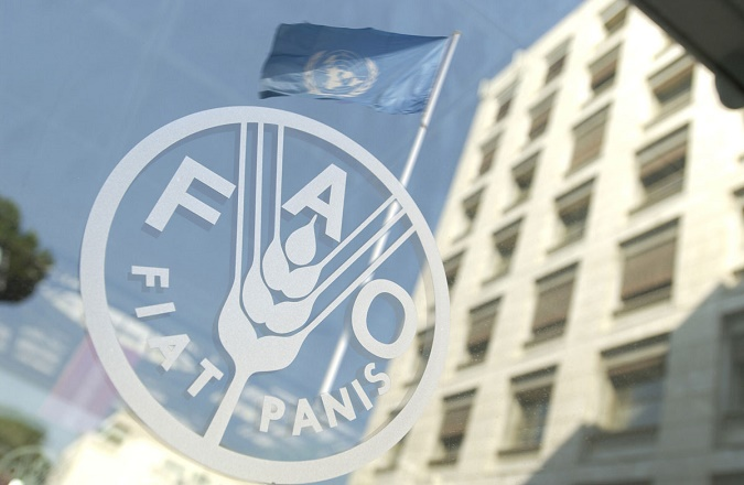 La FAO organise des formations et des ateliers régionaux au Maroc