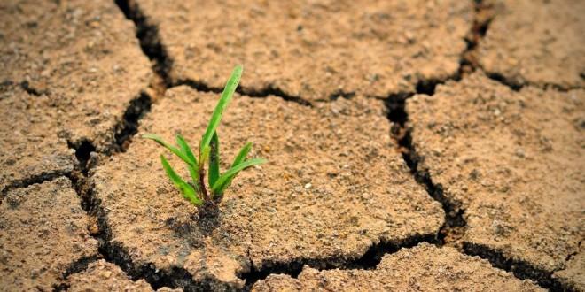 FAO: Situation mondiale de l'alimentation et de l'agriculture