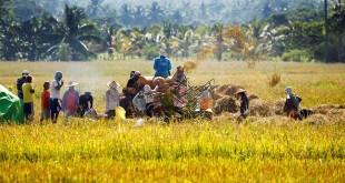 FAO: Les ravageurs et les maladies se propagent par voie maritime