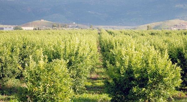 COP22: La FAO salue les efforts du Maroc