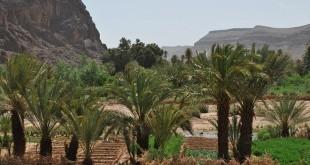 Le Festival des oasis à Fam El Hisn du 28 au 30 avril