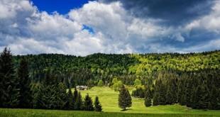Le rôle des forêts dans la régulation du climat