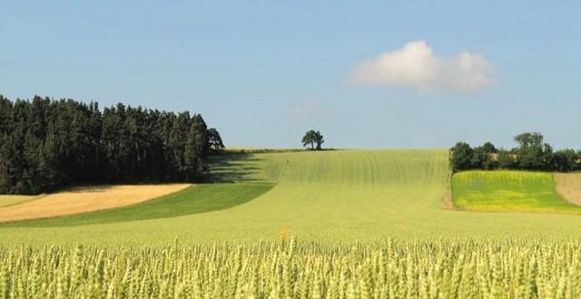 L'Agriculture durable tiendra son 1er forum à Mohammedia
