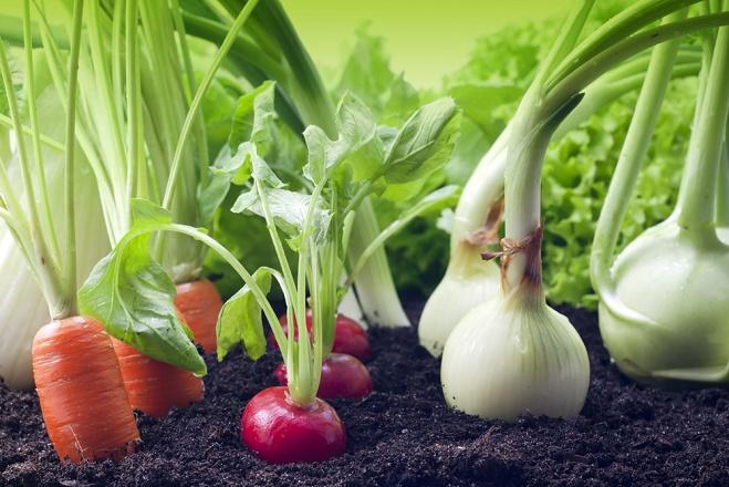 France: L'agriculture bio cartonne en 2016