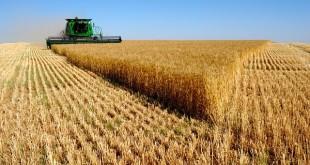 Aléas climatiques et assurance agricole ne vont pas de pair