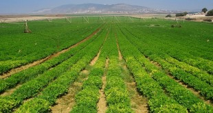 L'Europe en retard dans le secteur de l'assurance agricole