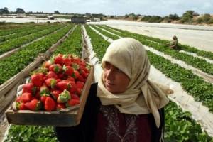 Gaza: l'agriculture un moyen de renforcer une économie brisée?