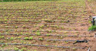 Goutte a goutte irrigation