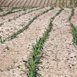 Retard de pluie au Maroc, le HCP révise le taux de croissance à la baisse