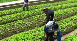Le Premier ministre indien a annoncé récemment un fort accroissement du budget dédié à l'assurance agricole. 1,14 milliards de dollars américains devraient être consacrés à cet objectif.