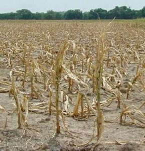 La MAMDA verse 1,2 milliard de dirhams aux agriculteurs sinistrés