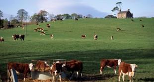 Rapprochement agricole entre le Maroc et l'Irlande ?