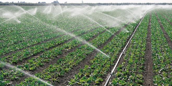 Eau et irrigation: Le PNAEI, un catalyseur d'opportunités pour l'agriculture