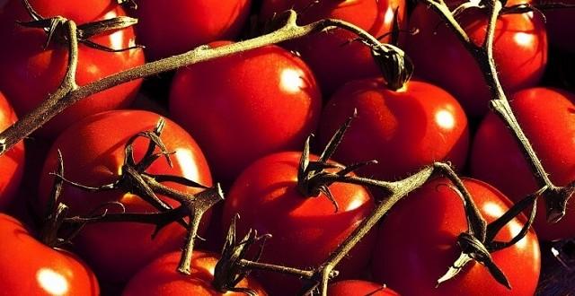 26,5 millions d'euros pour la tomate italienne