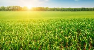 Saham de retour avec son offre agricole