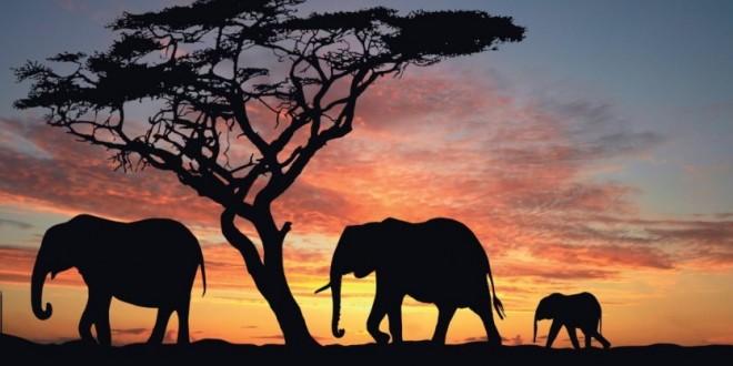 Un pacte commercial entre le Maroc et le Kenya ?