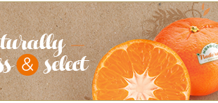 Exclusif! Le Maroc lance le nouveau Label « Morocco Nadorcott Seedless® »