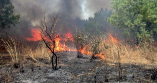 Un incendie de forêt maîtrisé dans la province de Larache