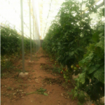 MORECO: La start-up marocaine oeuvre pour une agriculture verte