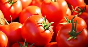 La tomate marocaine mise sous pression par l'Espagne