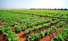 Le Maroc, une opportunité pour le marché italien