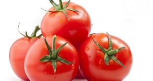 Les exportations marocaines ont fait chuter les prix des tomates espagnoles jusqu'à 38 % par rapport à 2018