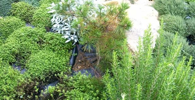 Journée d'étude à Meknès sur les plantes aromatiques et médicinales