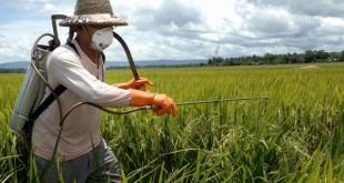 Produits phytosanitaires : Les nouveautés dans l'UE