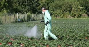 Traitement phytosanitaire
