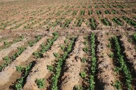 Le Maroc dresse son Plan Comptable Agricole