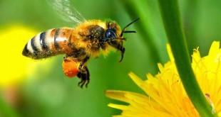Etude : Augmenter les rendements avec plus d'agents pollinisateurs