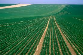 Lecture des cours agricoles en France, une légère baisse à la production