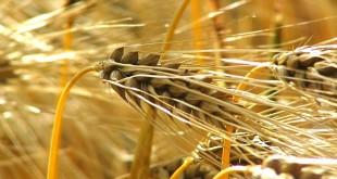 Assurance agricole, Saham signe la convention de « Taamine Al Mahssol »