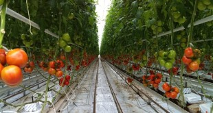 Exclusif: Boycott suisse de la tomate sud-marocaine en 2017!