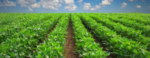 Plus de 2 MMDH d'investissements agricoles dans la région de Tanger-Tétouan-Al Hoceima