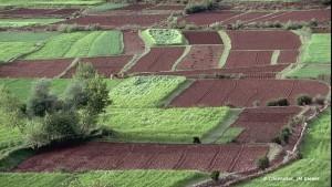 DRA : Plus de 315 000 ha emblavés dans la région du Nord