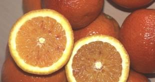 Démarrage de la campagne d'exportations des oranges en Tunisie