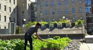 Nouvelle tendance, les légumes dans les villes