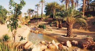 Forest Finance Allemagne : Les oliveraies et dattes du Maroc obtiennent la certification biologique