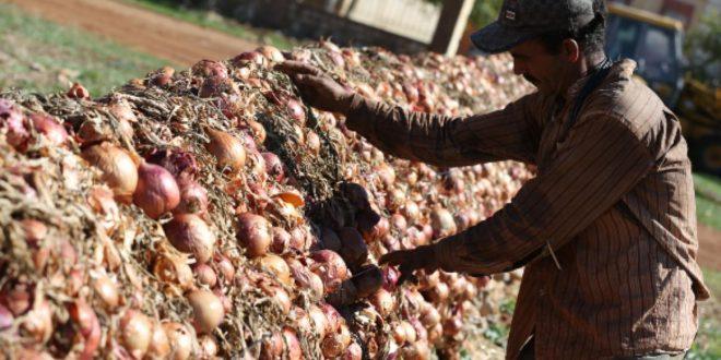 Fès-Meknès-La-production-agricole-est-sur-de-bons-rails