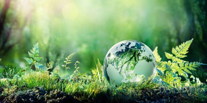 Les plantes résilientes sont une arme contre le changement climatique