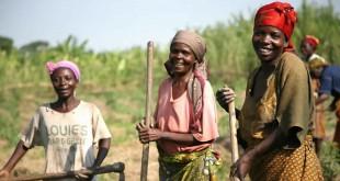 Les techniques agroécologiques africaines