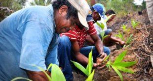 Les agriculteurs brésiliens nourrissent 10% de la population mondiale