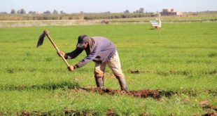 Maroc secteur agricole pluies
