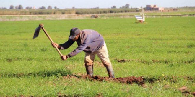 Sécheresse-Plus-de-32147-agriculteurs-de-Marrakech-Safi-indemnisés