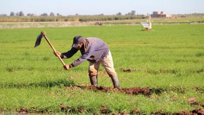 """Les petits agriculteurs main dans la main contre la """"Hogra"""""""